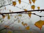 Осень, холодно и сыро