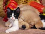 Домашние животные для ребёнка